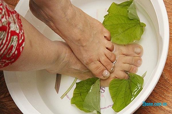 Chữa trị đau nhức xương khớp bằng cách ngâm chân với nước lá lốt